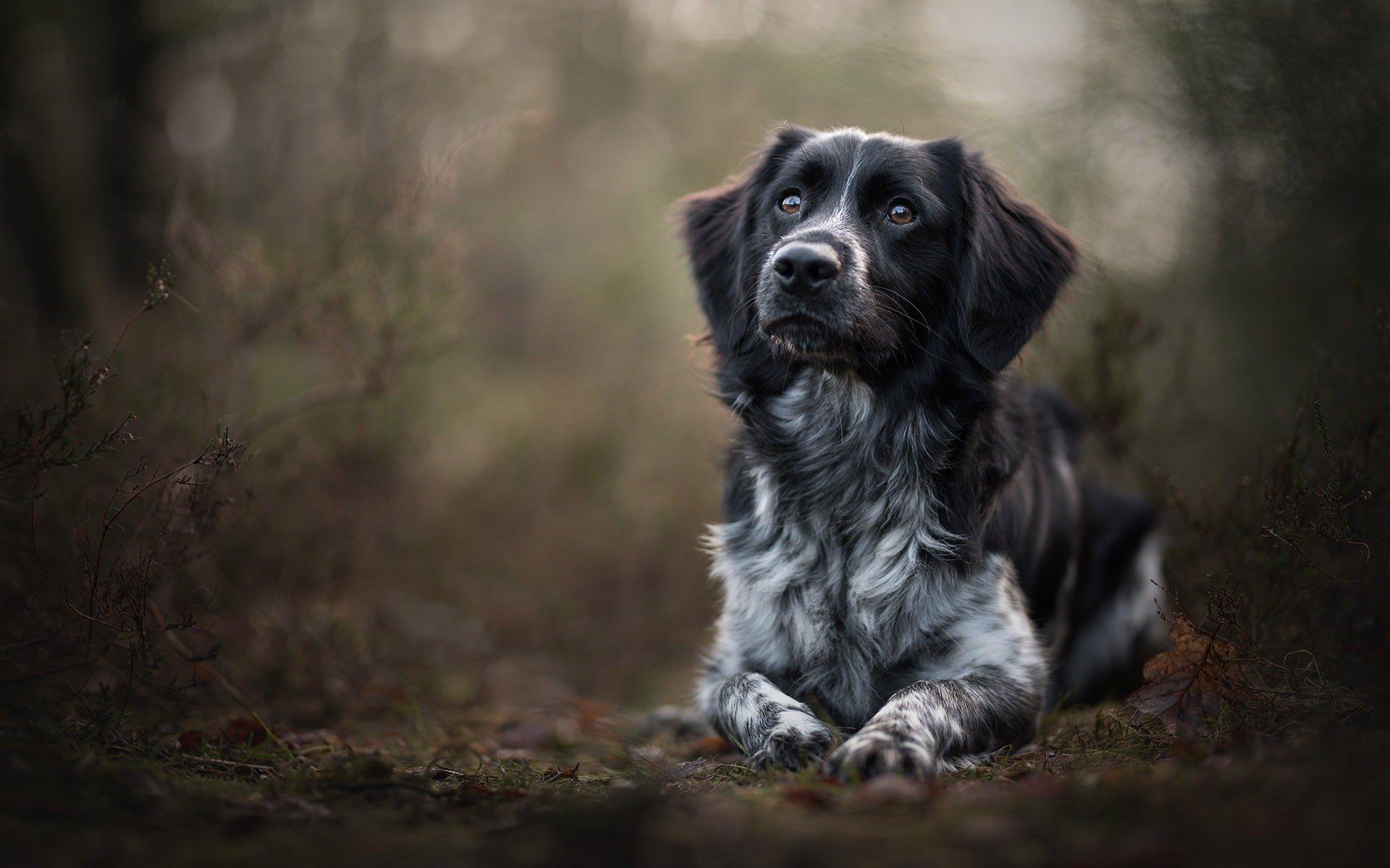 Masterclass Hondenportretten 1 & 2 september