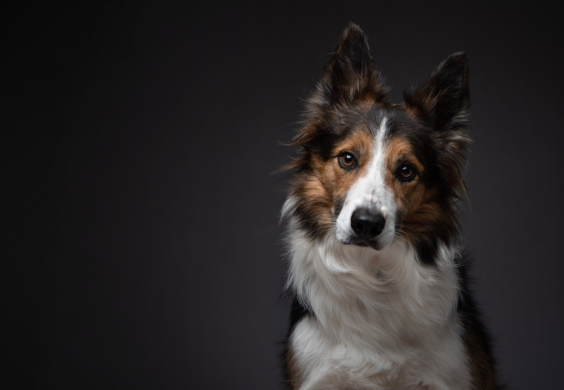 Serious Dog Portraits